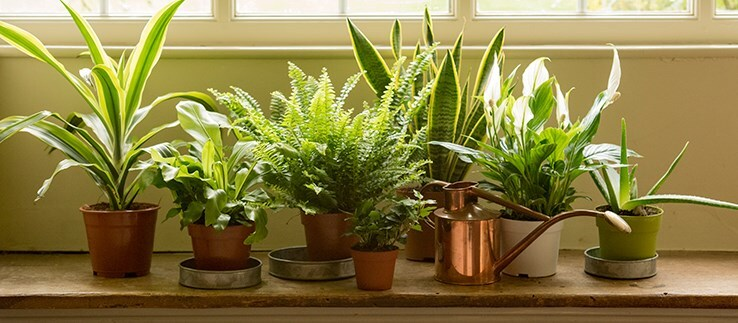 Plants for Indoor flowers and plants