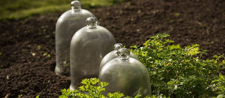 Selected cloches & growhouse