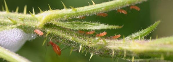 Dealing with common pests and diseases