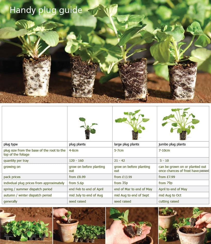 Bedding Plants Information