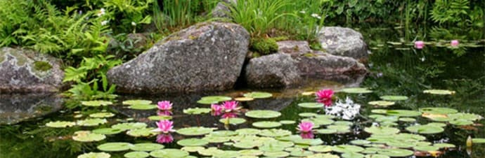 How to make a garden pond