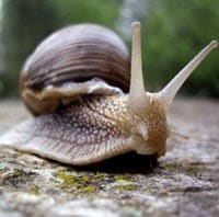 pic of snail