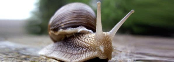 How to deal with slugs and snails