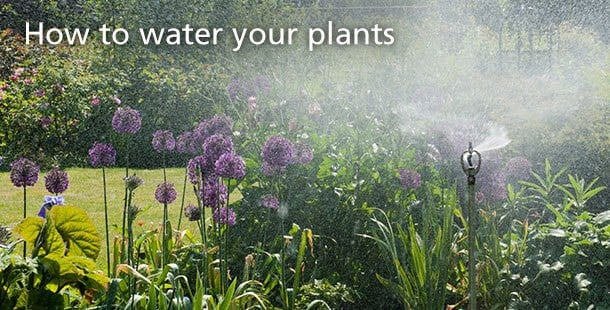 How to water your plants