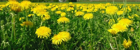 How to win the war on weeds