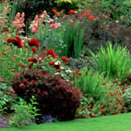 Buy Tall Border Perennials Delivery By Crocus