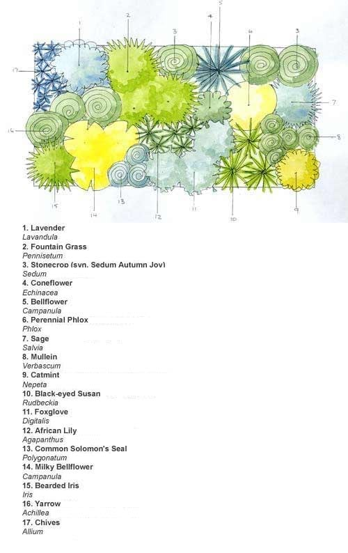 Ready made border cottage garden scheme for Planting schemes with grasses