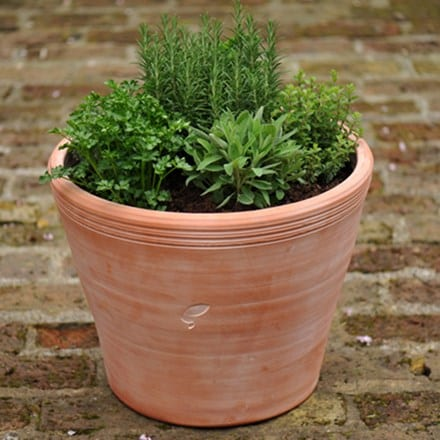 Kitchen garden herb pot combination