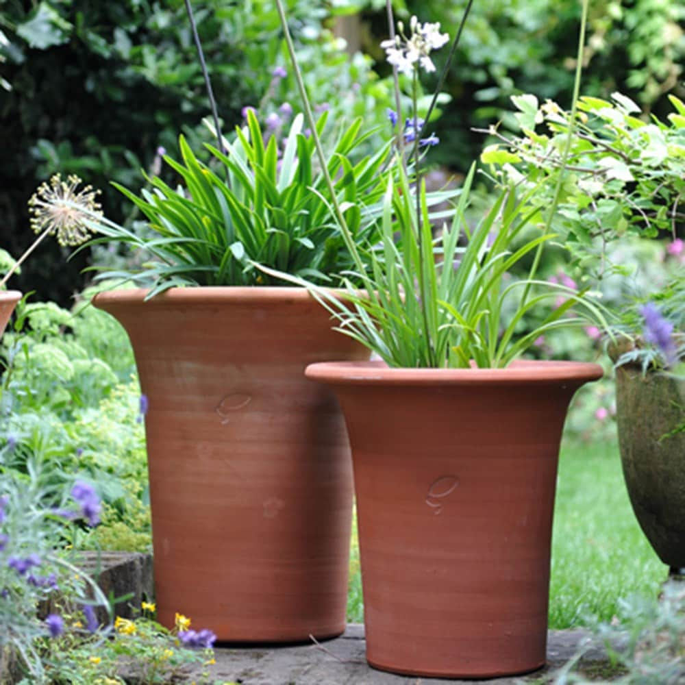 Buy Agapanthus and flared pot combination