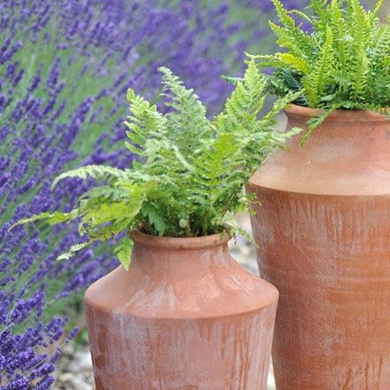 Polystichum aculeatum and oil planter combination