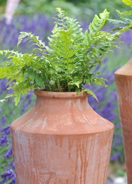 Polystichum aculeatum and oil planter combination