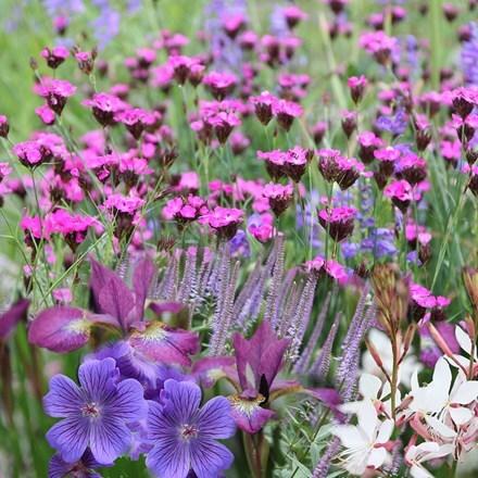 Ready-made border Gravel garden
