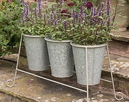 Agastache and pot stand combination