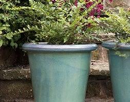 Fern and glazed pot combination