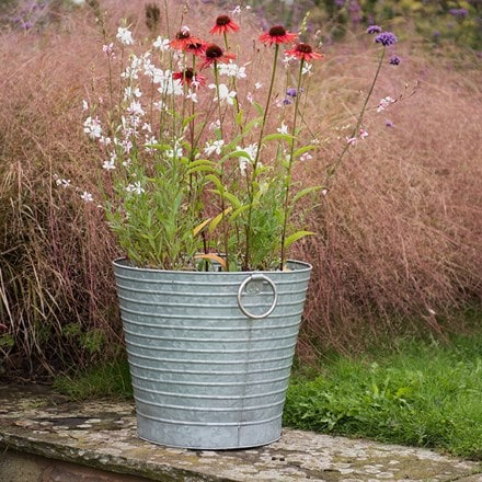 Summer perennials and ribbed planter combination