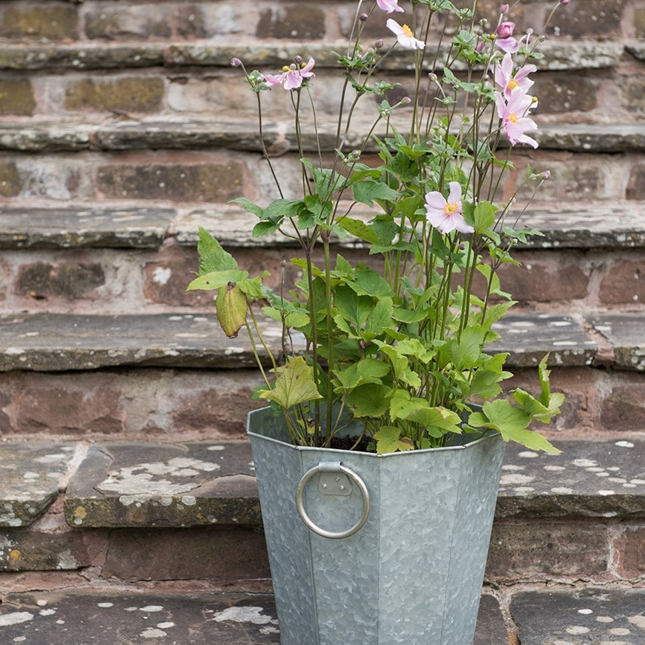 Anemone & galvanised pot combination
