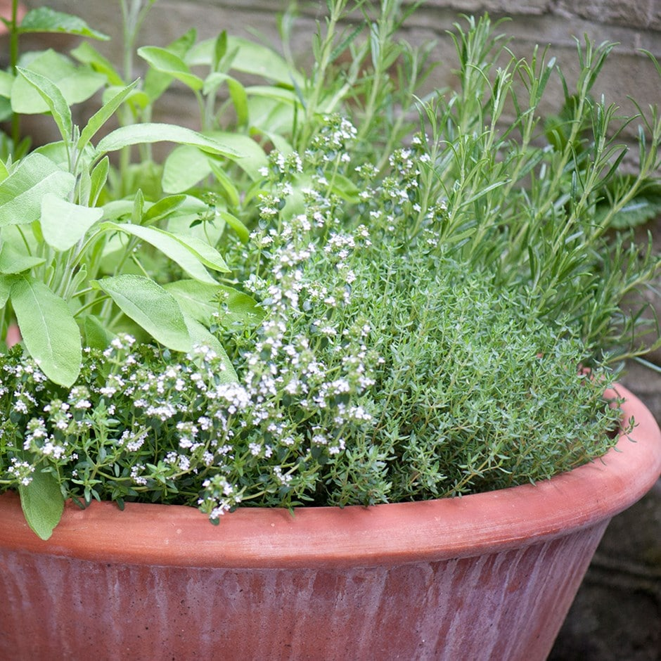 herbs & lucca pot combination