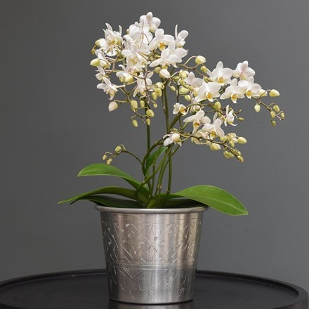 Phalaenopsis 'White Willd Orchid' and hand etched aluminium planter