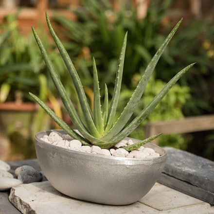 Aloe vera and rough cast aluminium oval bowl