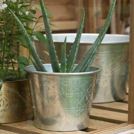 Aloe vera and hand etched aluminium planter