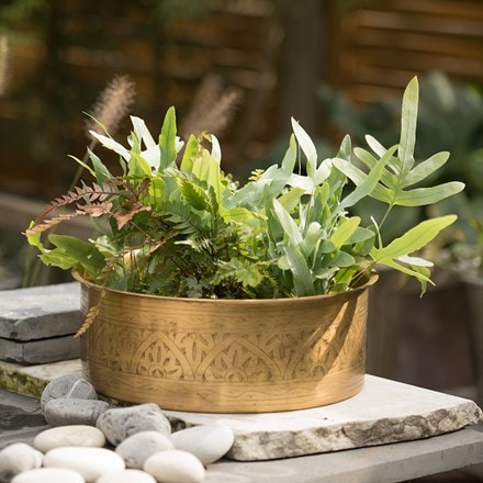 6 Starter ferns and a hand etched brass planter