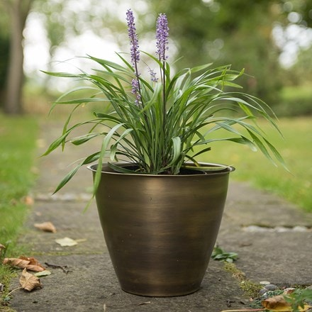 Liriope and a spun metal planter - antique brass