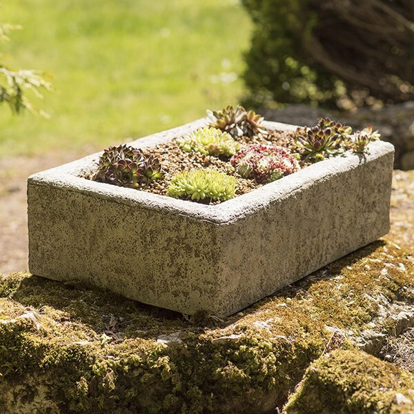 Sempervivum collection and alpine trough