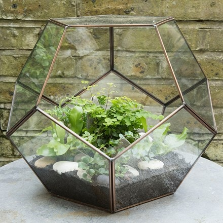 Terrarium and starter ferns combination