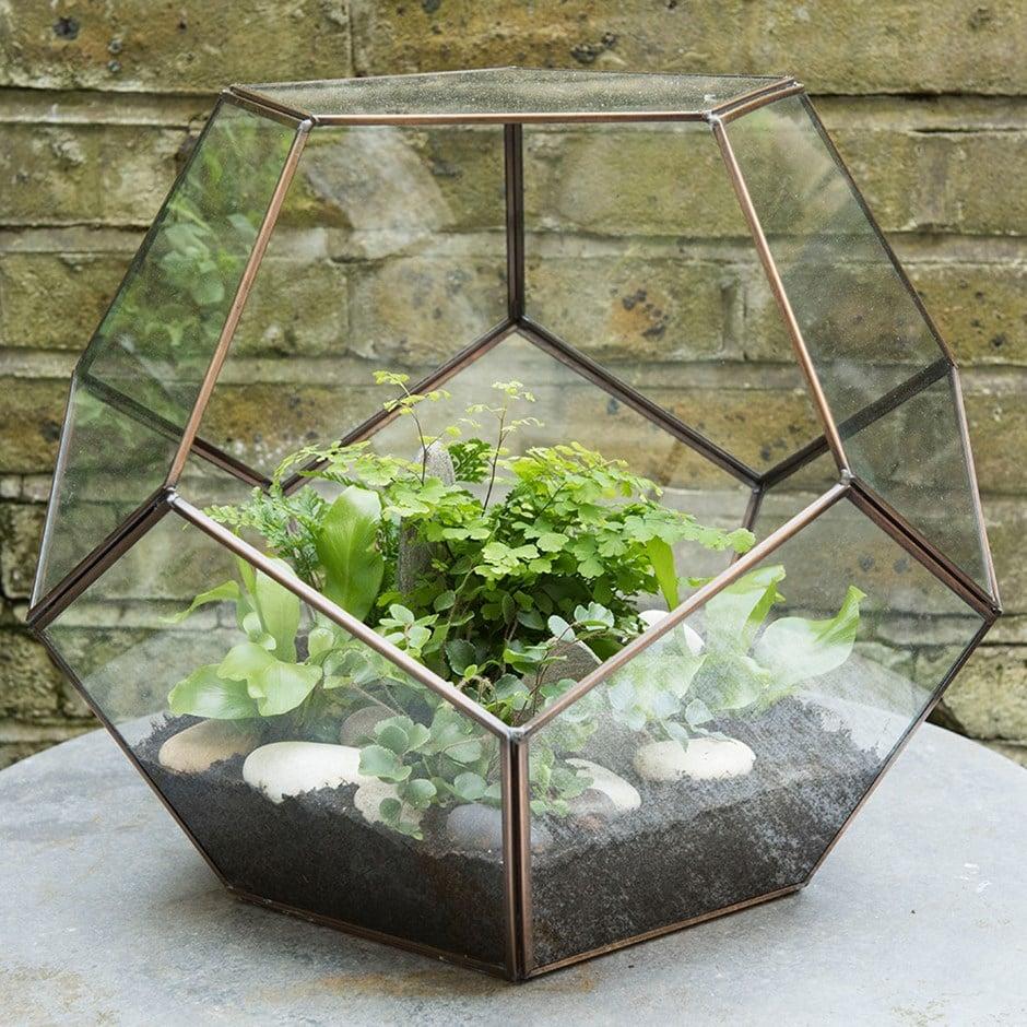 Terrarium And Starter Ferns Combination