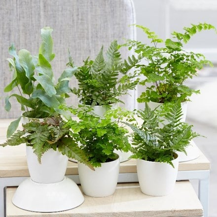 Fern collection and pot covers