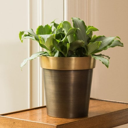 Murdannia loriformis 'Bright Star' and antique brass pot cover with polished rim
