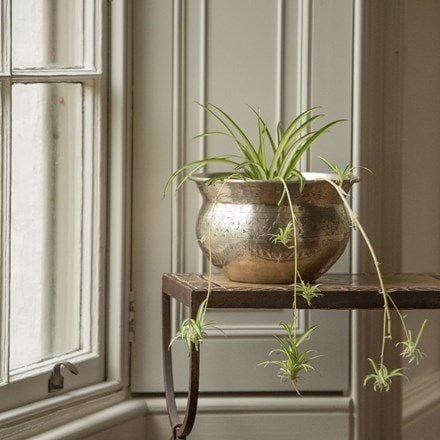 Chlorophytum comosum 'Variegatum' and silver plated brass etched bowl