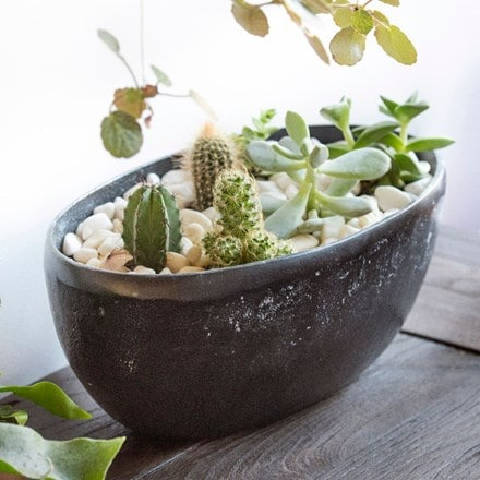 Cactus, Echeverias and rough cast aluminium bowl