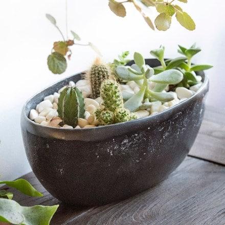 Cactus, Echeverias and rough cast aluminium bowl