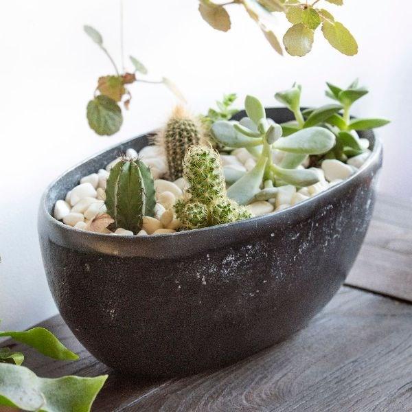 Cactus, Echeverias & rough cast aluminium bowl