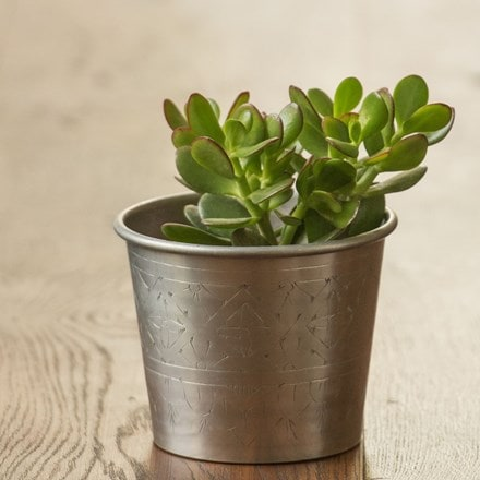 Crassula ovata and hand etched aluminium planter