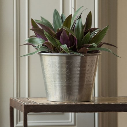 Tradescantia spathacea 'Sitara' and hand etched aluminium planter
