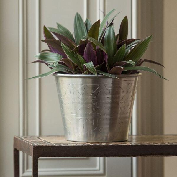 Tradescantia spathacea 'Sitara' & hand etched aluminium planter