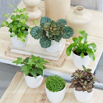 Bottle garden /  terrarium plant collection and pot covers