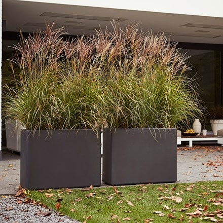 Miscanthus sinensis 'Kleine Silberspinne' and high-sided trough planter