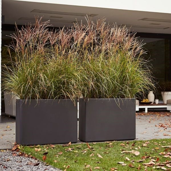 Chinese silver grass & pot cover combination