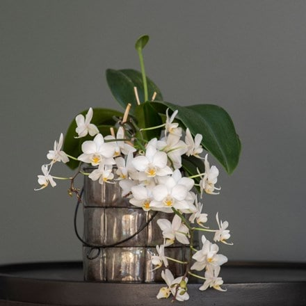 Phalaenopsis White Willd Orchid and blown glass lantern