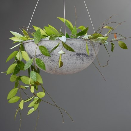 Sphere plant holder and Hoya gracilis - wax flower
