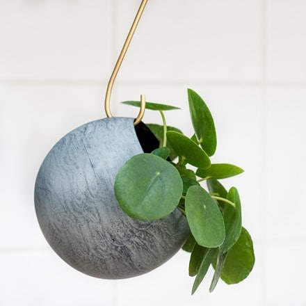 Sphere plant holder and Pilea peperomioides