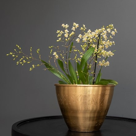 Oncidium Twinkle Jasmine & solid etched brass pot cover combination