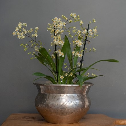 Oncidium Twinkle   silver plated brass etched bowl combination