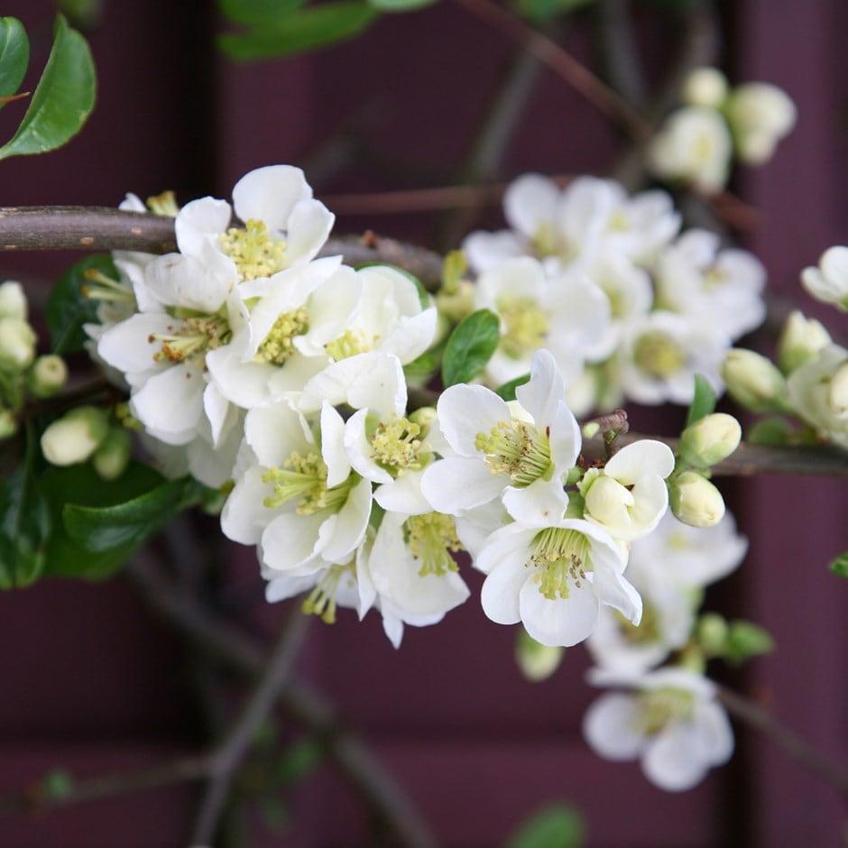 White Flower Pots Outdoor