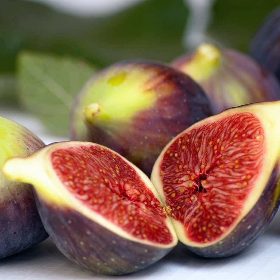 Buy Fig Brown Turkey Ficus Carica Brown Turkey Delivery
