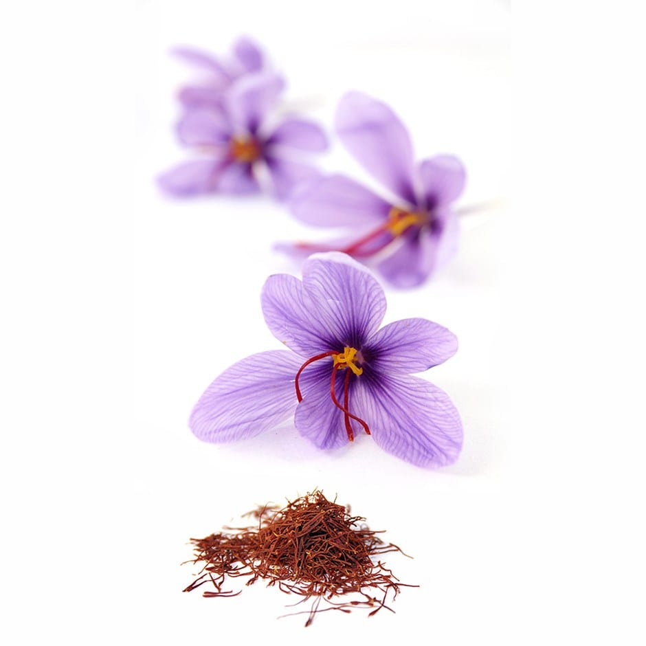 Grow your own saffron - saffron crocus bulbs