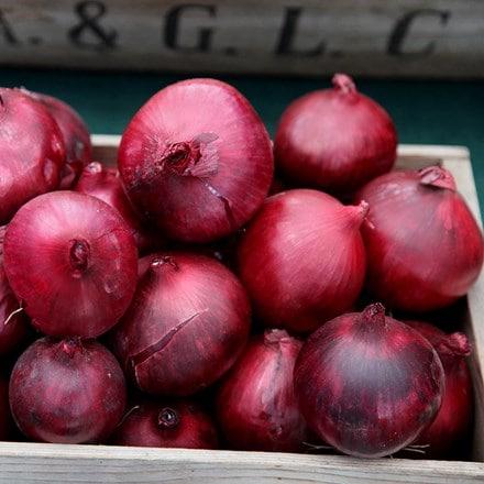 onion Red Baron